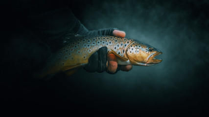Beautiful trout close-up on a dark background.