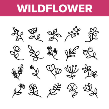 Wildflower Natural Collection Icons Set Vector. Wildflower Branch And Flower Bouquet, Blooming Nature Floral Botany Plant Concept Linear Pictograms. Monochrome Contour Illustrations