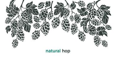 Set of hop. Vector botany border. Bio beverage