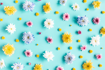 Flowers composition. Pattern made of chrysanthemum flowers on blue background. Spring concept. Flat lay, top view