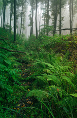 Door stickers Jungle natural green forest, wilderness jungle landscape