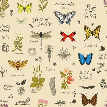 Vector background with Colorful butterflies, beetles, various herbs, sketches and inscriptions. Seamless pattern with insects and medicinal herbs in retro style. Wallpaper, wrapping paper, fabric