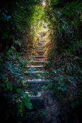 Photo sur Aluminium Noir looking up stair stairs stairway path in the forest in china