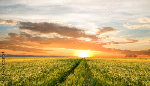 Fototapete Bright sunset sky with cumulus over a grain field. Rural summer landscape. Beauty nature, agriculture and seasonal harvest time.