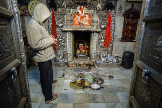 Bikaner, India - January 5, 2020: Worker at Karni Mata Temple in the altar of the famous rat temple of India. Rats crawl around.