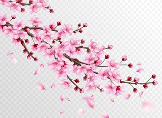 Realistic sakura. Beautiful sakura branches with pink flowers and falling petals, romantic floral japanese cherry decoration vector illustration