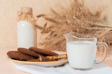 Healthy food, breakfast, cereal snack. Fresh milk in a glass jug and oatmeal cookies on the table, an armful of ears of corn on a peach color background. A balanced diet, protein and carbohydrates