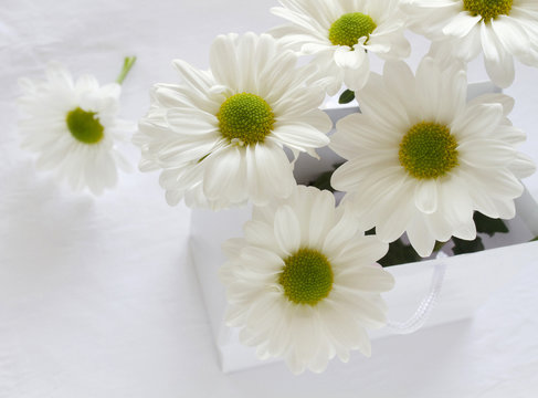 White daisies with green centres in a gift bag with space for text