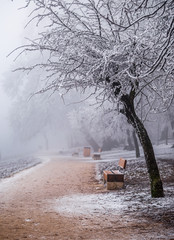 Budapest, Hungary - Beautiful snowy tree and foggy winter scene at Normafa with bench and footpath on the top of Svabhegy which is a popular tourist sight in the Buda Hills