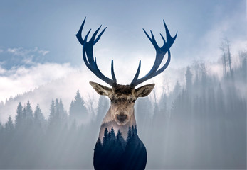 Poster Deer Red deer and the misty forest