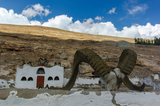 Horns and skulls of sheeps marco polo and capricorns in a mazar in the Pamir mountains