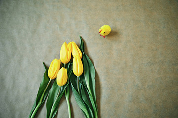 Bunch of yellow tulip flowers and chicken. Spring concept.