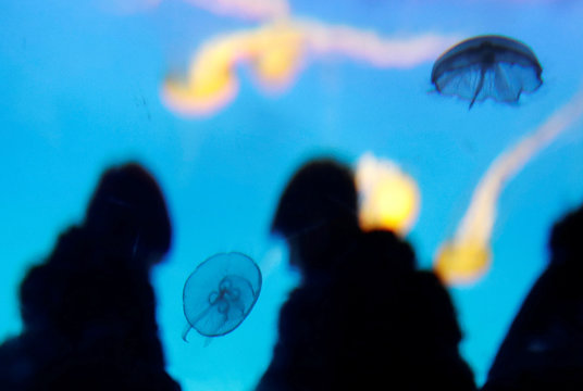 Visitors look at jellyfish swimming in giant spherical tanks