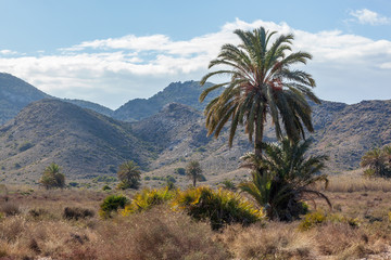 Lush vegetations and palm trees surrounded with mountains located within Calblanque Regional natural Park, Murcia, Spain