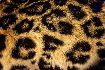 Fototapeten Leopard Leopard skin pattern, leopard fur texture