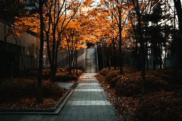Papiers peints Gris traffic Escaliers pendant l'automne à Séoul.