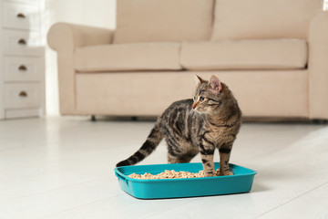 Tabby cat near litter box at home