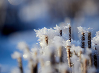 Close up of frozen straw