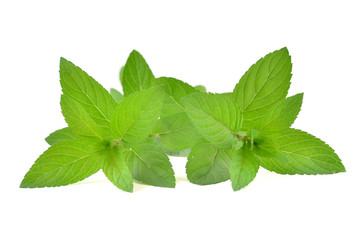 Fresh green mint leaves or mentha piperita leaves. Herb isolated in white background.