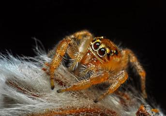 Foto auf AluDibond Schmetterling Close up beautiful jumping spider