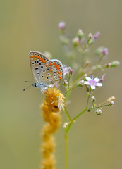 Deurstickers Vlinder Closeup beautiful butterfly sitting on the flower.