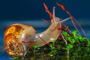 Fotobehang Vlinder Close up beautiful Snail in the garden