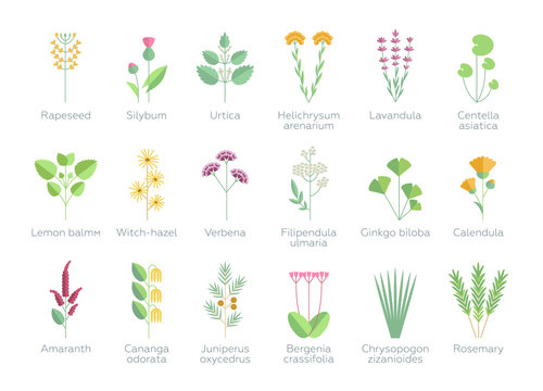 Set of different plants, flowers and herbs. Floral, nature, leaves. Organics for bio spa cosmetics. Vector illustrations in flat design style. White background isolated