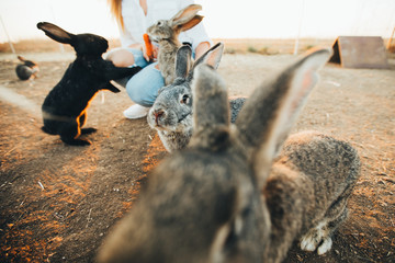 A lot of rabbits on the farm. Feeding rabbits in a pen. Easter pictures.