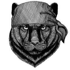 Panther, Puma, Cougar, Wild cat. Wild animal wearing pirate bandana. Brave sailor. Hand drawn image for tattoo, emblem, badge, logo, patch