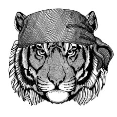 Tiger. Wild animal wearing pirate bandana. Brave sailor. Hand drawn image for tattoo, emblem, badge, logo, patch