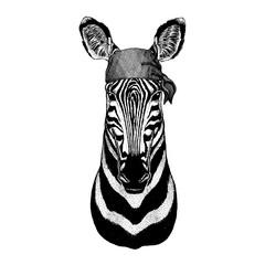 Zebra Wild animal wearing pirate bandana. Brave sailor. Hand drawn image for tattoo, emblem, badge, logo, patch