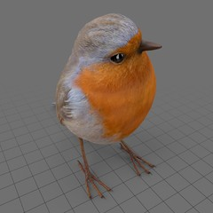 European robin watching