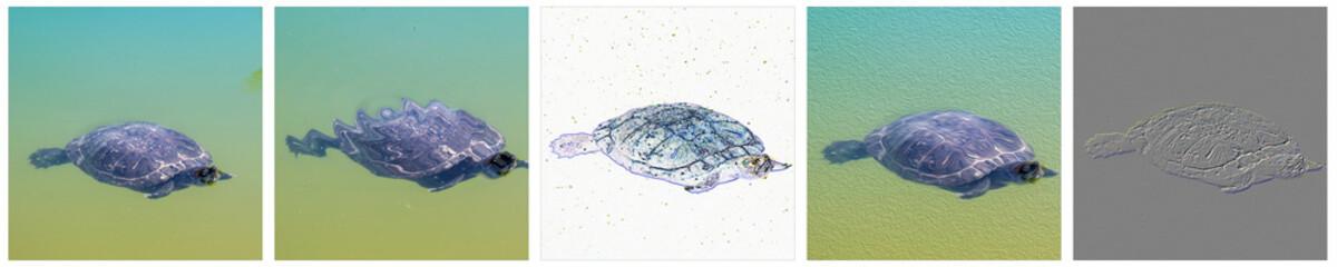 Fotografía de una tortuga con la aplicación de efectos variados de estilización.