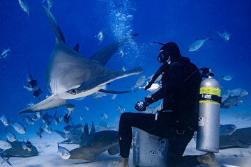 Great Hammerhead diving in the Bahamas