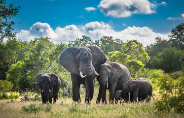 Photo sur Plexiglas Elephant Elephants family in Kruger National Park, South Africa.