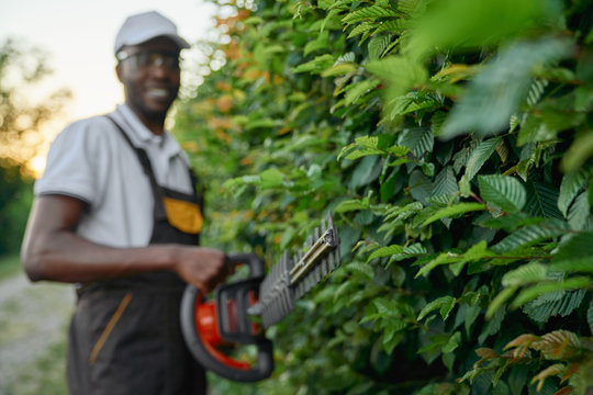 Handsome afro man in uniform trimming bushes with scissors
