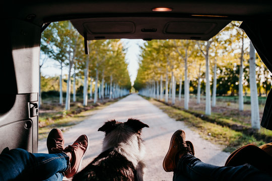 cute border collie dog and two woman legs relaxing in a van. travel concept.