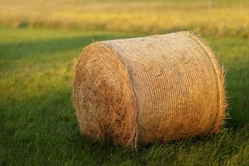 Roll of hay lying in autumn sun on mown field