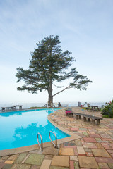 Big tree at poolside along the Pacific Ocean in Big Sur, California.