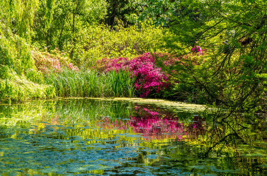 Beautiful landscape of Isabella plantation in Richmond park in springtime in London