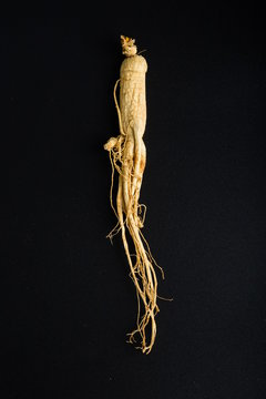 Ginseng has medicinal properties against a white background and can be dipped in water and sliced, also known as American ginseng-Panax quinquefolius