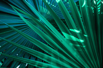 abstract palm leaf textures on dark blue tone, natural green background