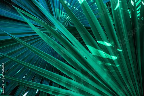 Wall mural abstract palm leaf textures on dark blue tone, natural green background