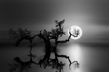 old tree under the moonlight
