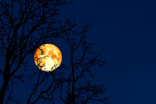 full worm moon back on silhouette plant and trees on night sky