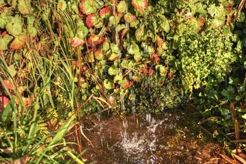山の湧水が滴り落ちている水溜まり
