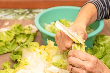 mains et couteau qui prépare la salade de scarole