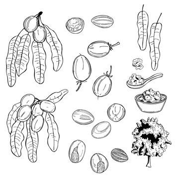 Shea set.  Fruits, leaves and butter. Vector sketch  illustration.