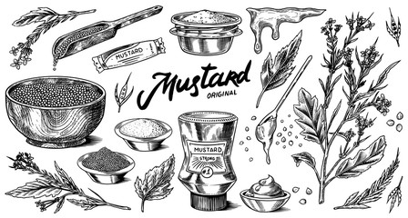 Mustard seeds and plant set. Spicy condiment, seasoning bottle, packaging and leaves, wooden spoons, sauce in gravy boat, whole and ground grains. Vintage background poster. Engraved hand drawn sketch