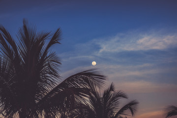 Silhouettes of palm trees against the moon and sky during a tropical night.